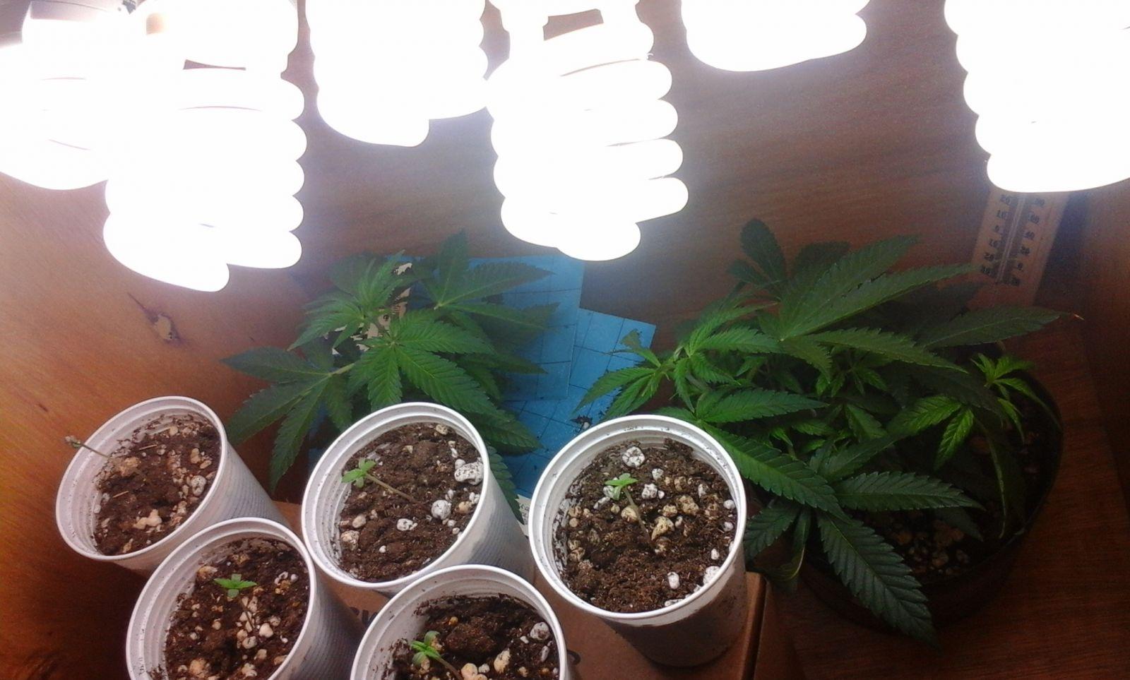 Grow Fluor