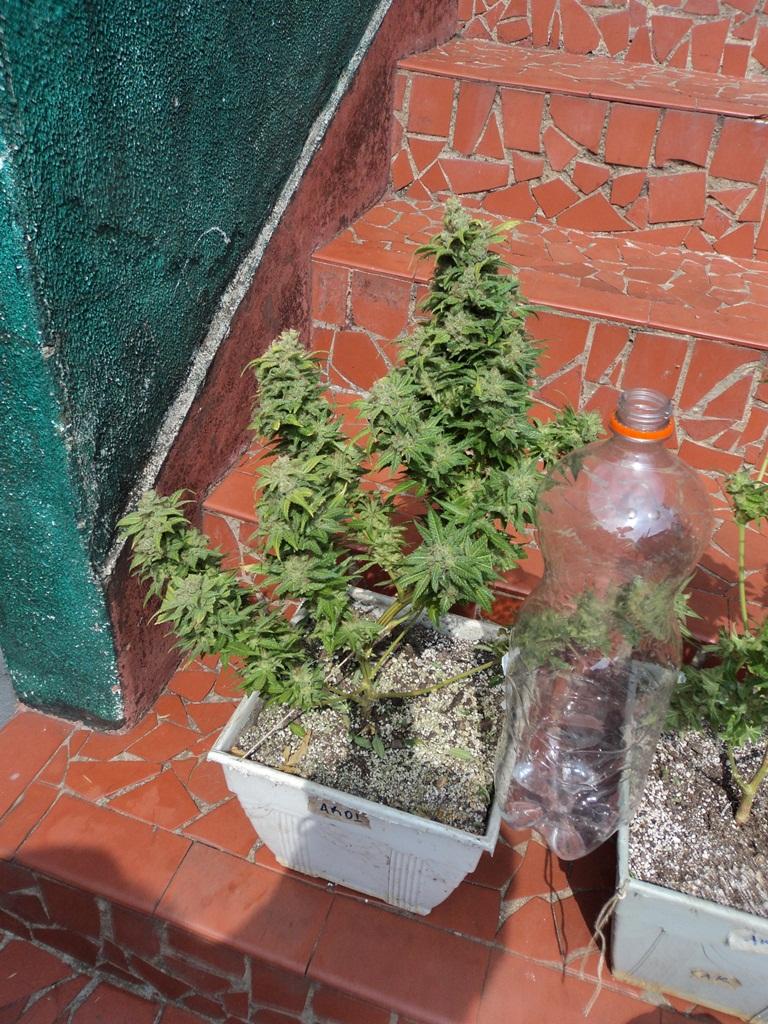 1º cultivo indoor