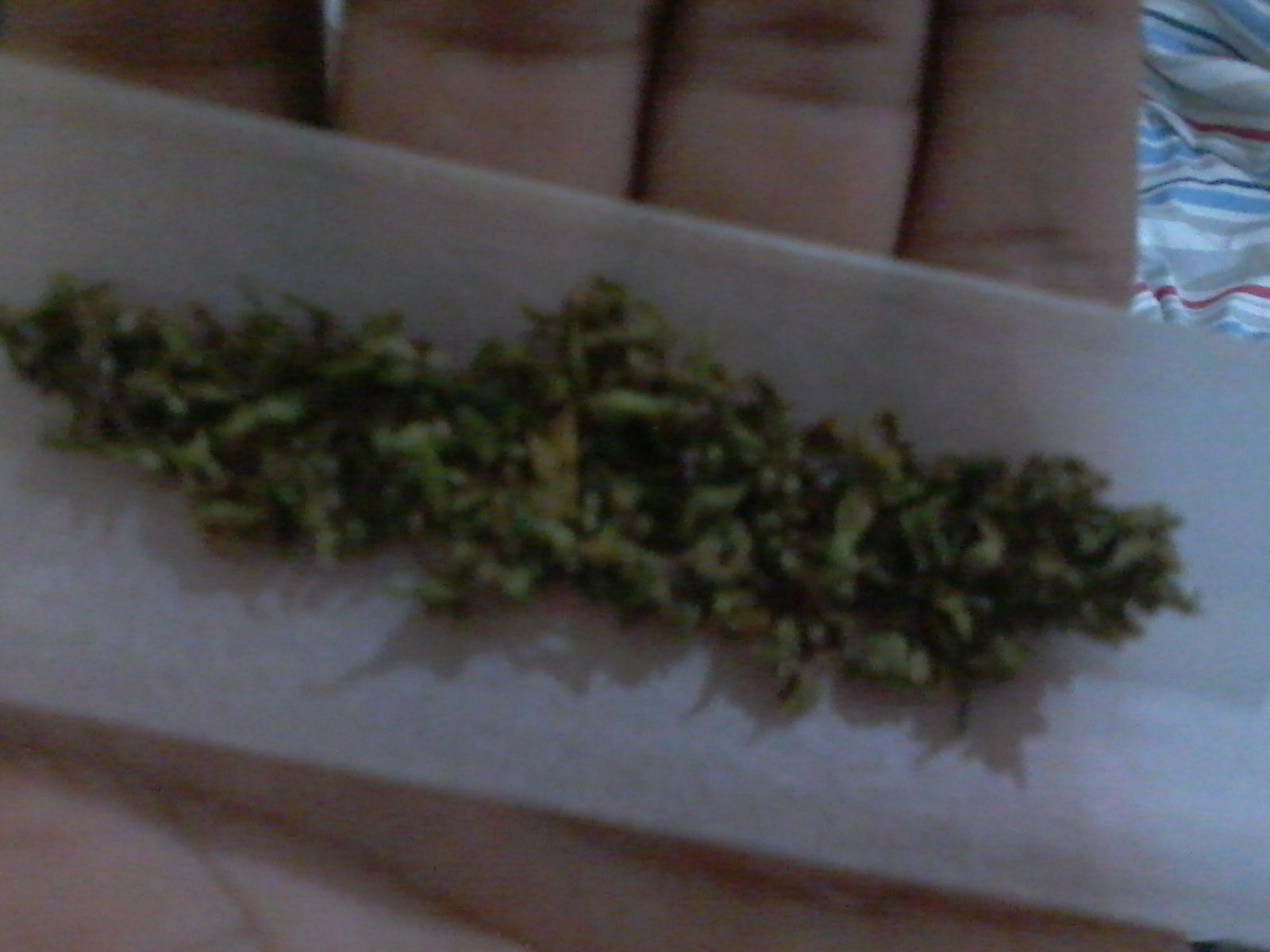 Fumando o natural, isso é cannabis, obrigado GR !
