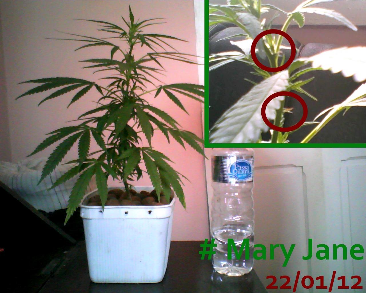 Mary Jane 22/01/12