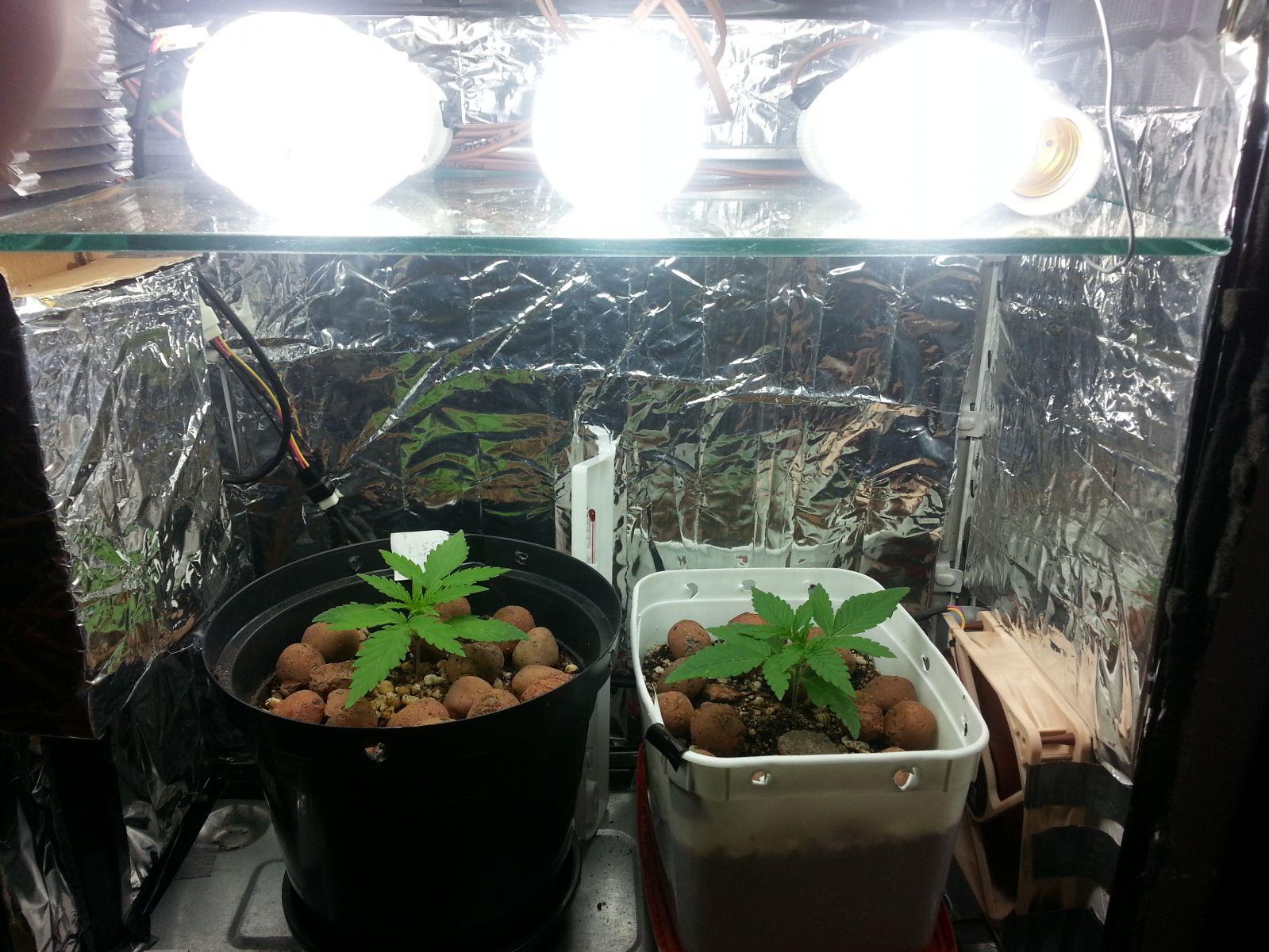 PC Grow Fluor  - 1º Cultivo