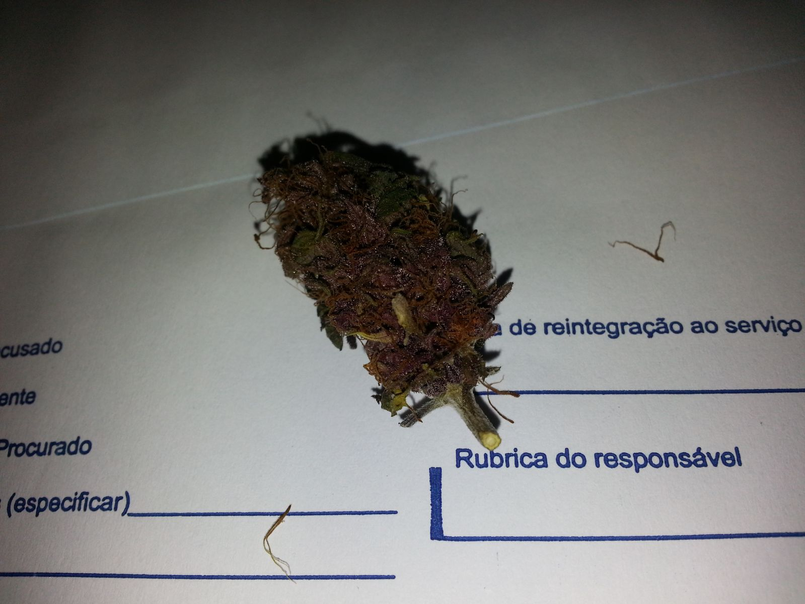 AFK Roxinha