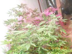minha flora