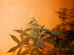 Flora do Evandron.. agora com HPS 400 W