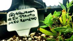 #Eu planto meu remédio