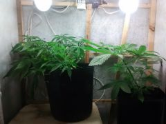 07-01 GROW
