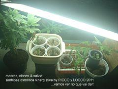 simbiose osmótica sinérgistica By RICCO Y LOCCO 2011 A