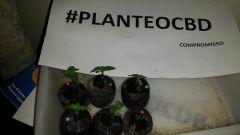 planteocbd4