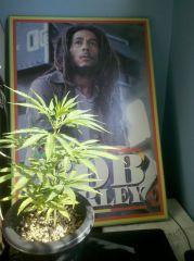pibber E Bob