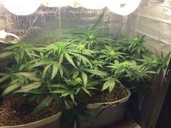 grow-4