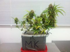 mk_39
