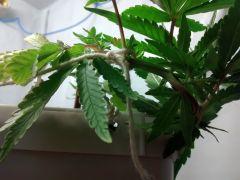 Planta 1 amarras 2