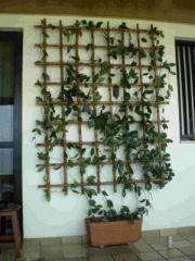 trelica Em bambu tratado Com vasos MLB O 3730894384 012013