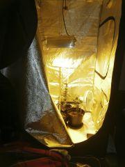 geral refletor 45cm