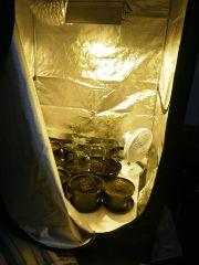 geral 67 dias germinação 01-04 Flora 20-05