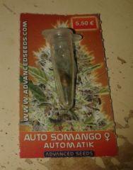 autosomango3