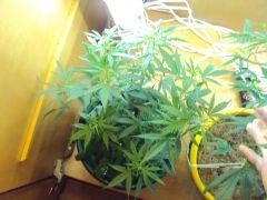 Pren#2 Inicio da Flora