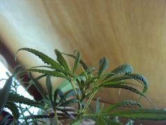 Pren#1 Inicio da Flora