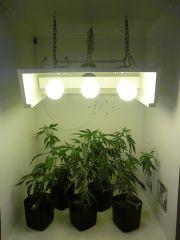 Clones no ambiente da flora