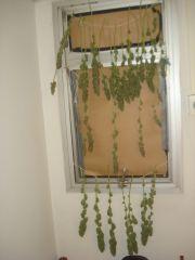 persiana verde final