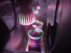 Pc Grow Led
