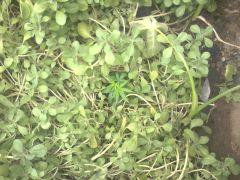 ela quase invisivel no meio das plantas de minnha mãe.
