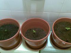 grow-bathroom