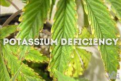 deficiencia De potassio