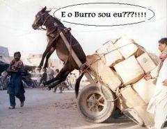 E o burro...