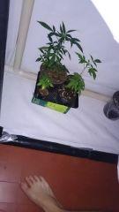 Grow de flora