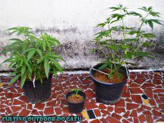 Grow Outdoor