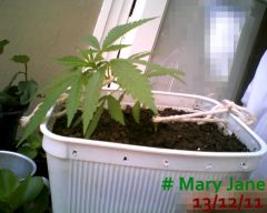 Mary Jane 13-12-11