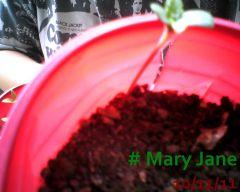 Mary Jane 10-11-11