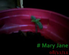 Mary Jane 08-11-11