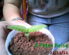 Peter Beise 21-11-11