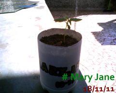 Mary Jane 18-11-11