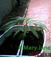 Mary Jane 16/12/11