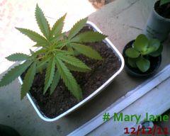 Mary Jane 12-12-11