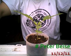 Peter Beise 11-12-11
