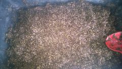 carolina soil