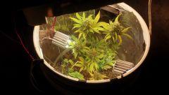 Planta em um Space Bucket
