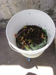Baldes com restos de uma composteira