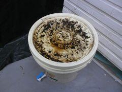 restos de húmus e algumas minhocas