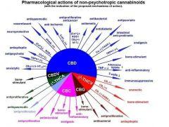farmacologiadaCannabis