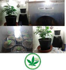 grow 9