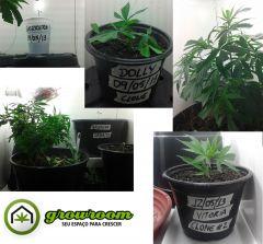 grow 8