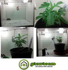 grow 6