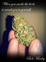 When you smoke the herb...