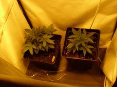 grow geral