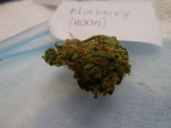 The Noon   Blueberry